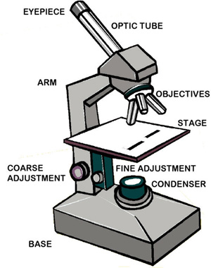 Comparing And Contrasting The Different Parts Of The Microscope